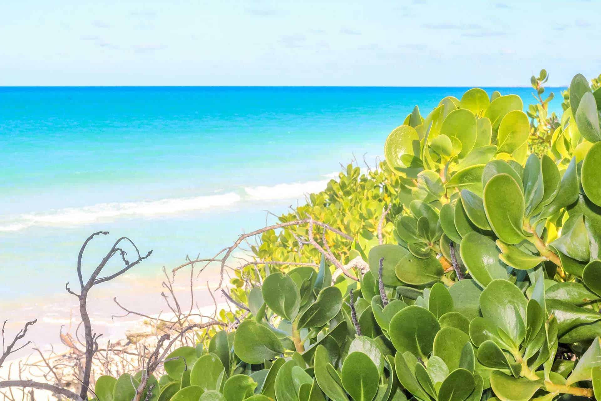 A0211 journee plage cayo santa maria 06 cuba autrement