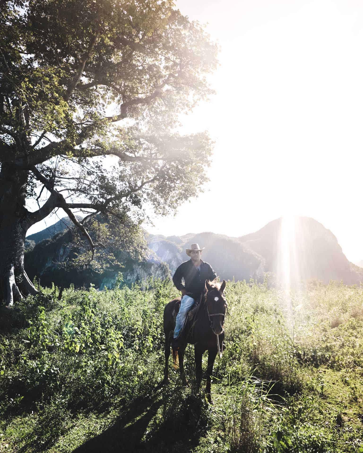 vinales champs de tabac vallee cheval cuba autrement