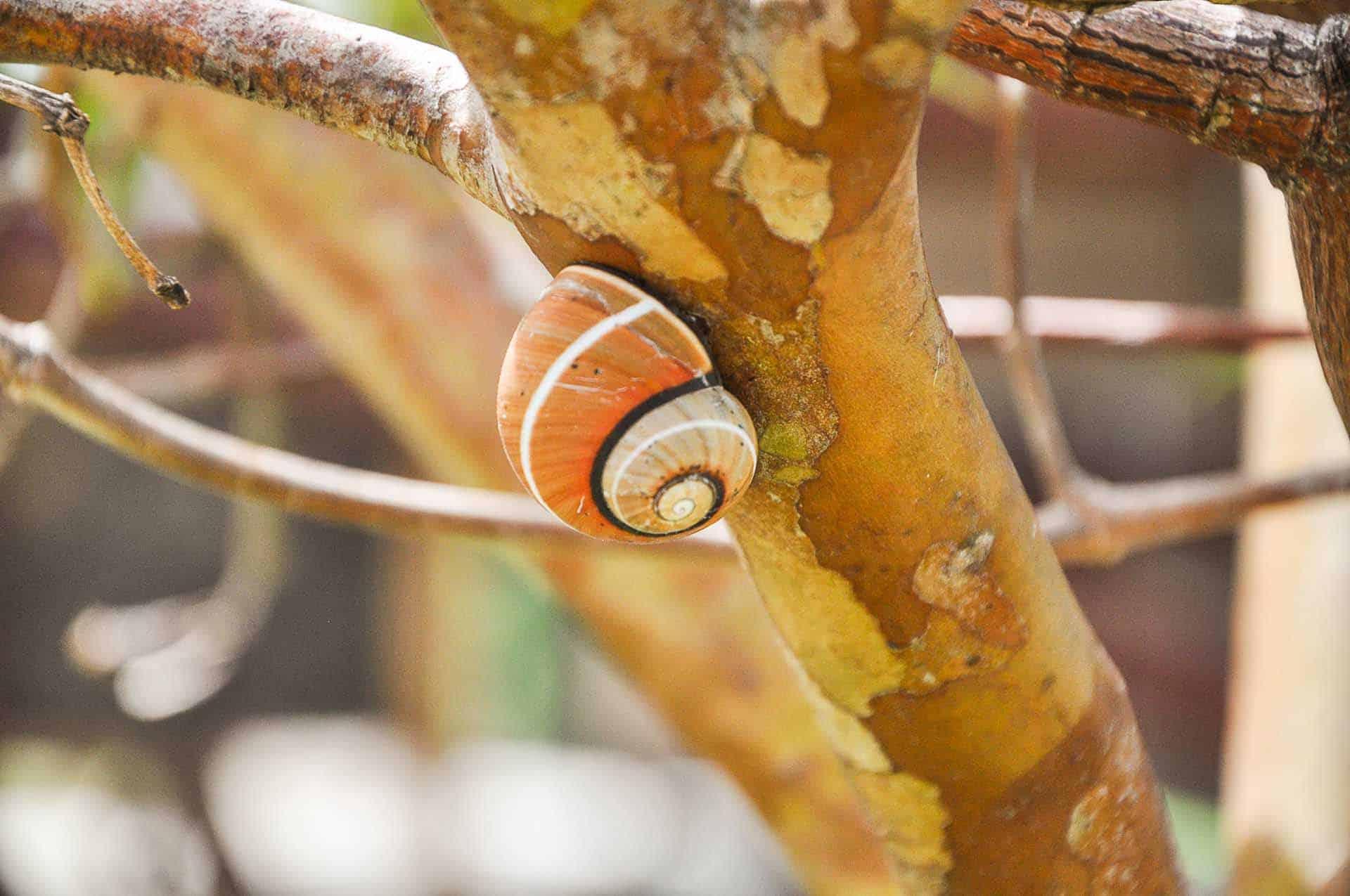 baracoa escargot polimita cuba autrement